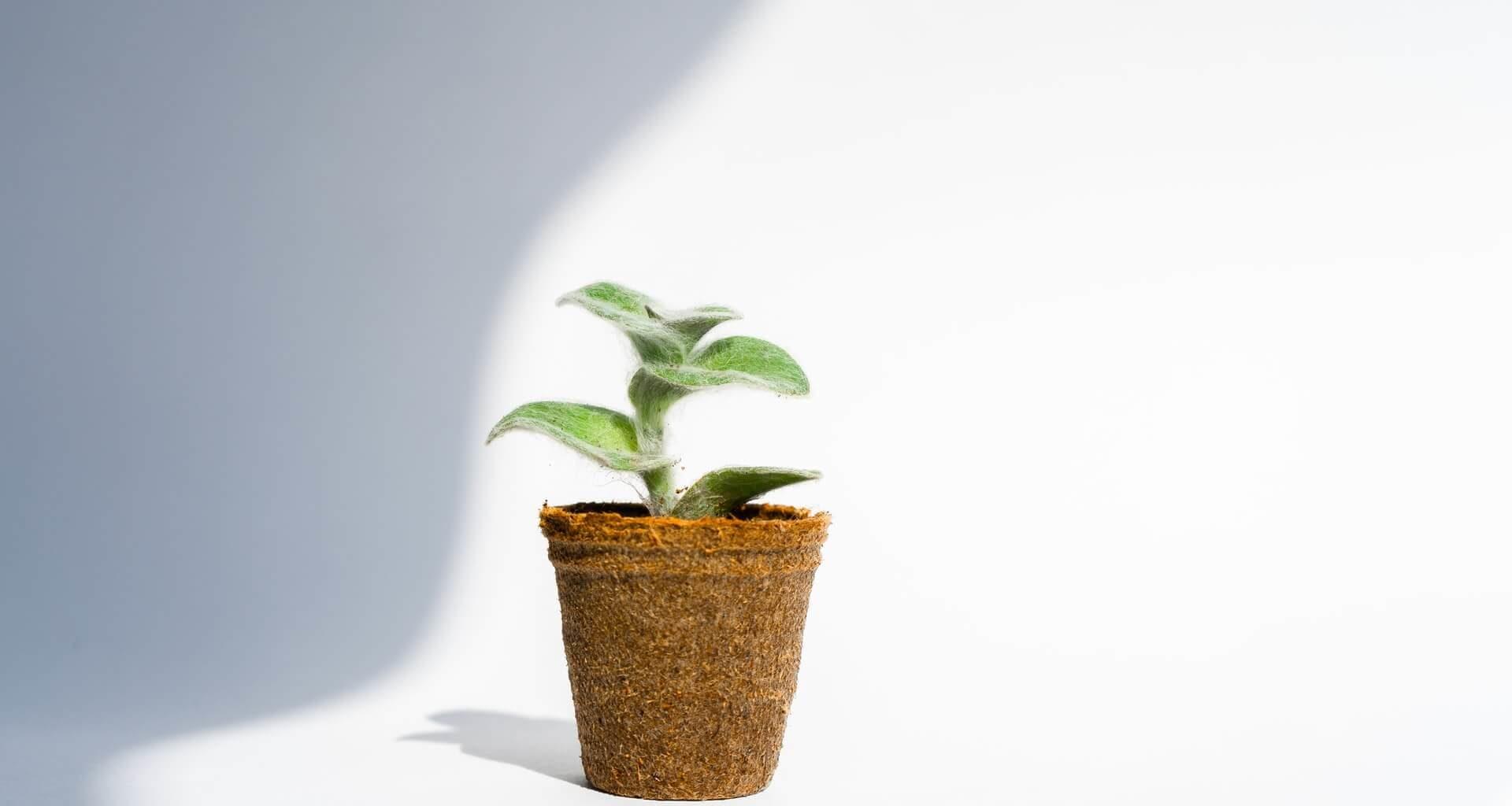Planta en maceta para representar el concepto de sustentabilidad