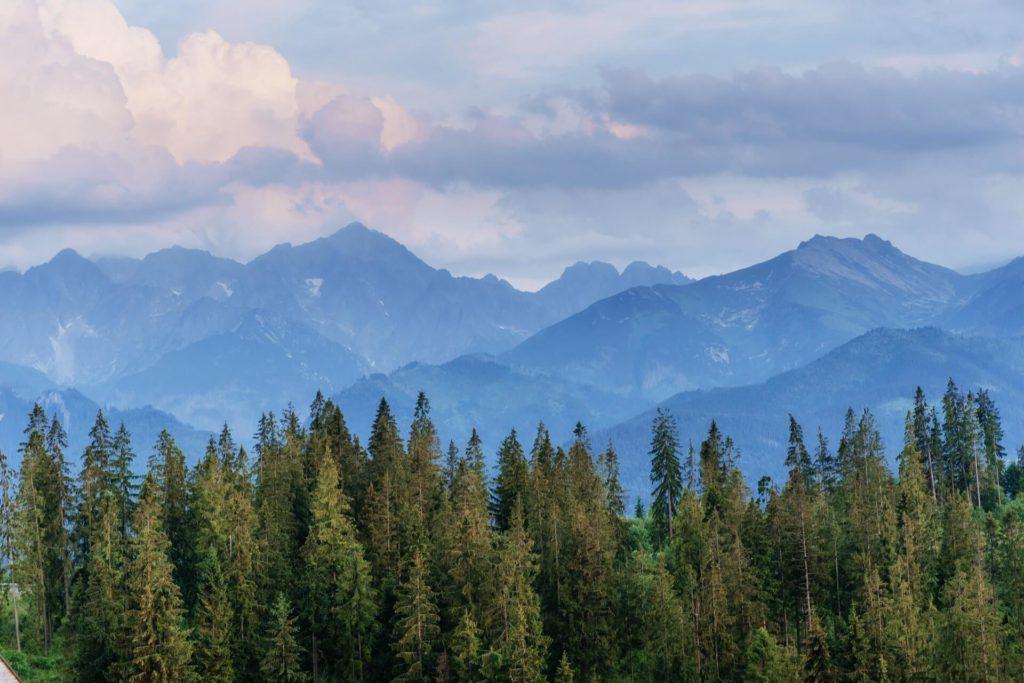 Bosque verde con una montaña de fondo